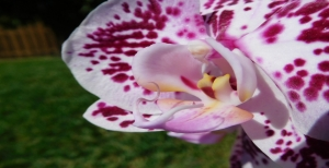 Orchidee, come curarle